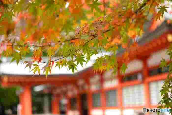 3月下旬からは桜、5月中旬にはミヤマキリシマ、11月下旬には紅葉が目を楽しませてくれます。どの季節に訪れても豊かな自然でリフレッシュできますよ。