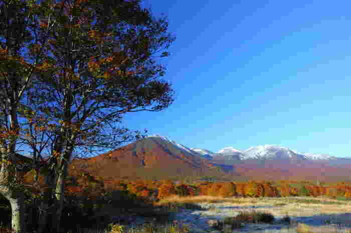 こちらは雪をかぶった八甲田山を遠目に見た様子。10~11月に初雪が降るので、タイミングによっては、山頂に真っ白な雪、中腹では紅葉、麓は緑、とさまざまな季節を一度に楽しめることも。