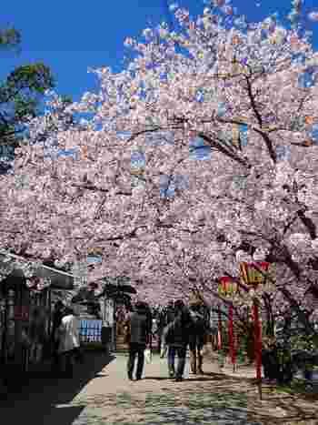 小城藩の初代藩主、鍋島元茂と二代目藩主の鍋島直能の命のよって造園された庭園と桜並木を前身とする小城公園は、「日本さくら名所100選」のほか「日本の歴史公園100選」にも選定されている景勝地です。
