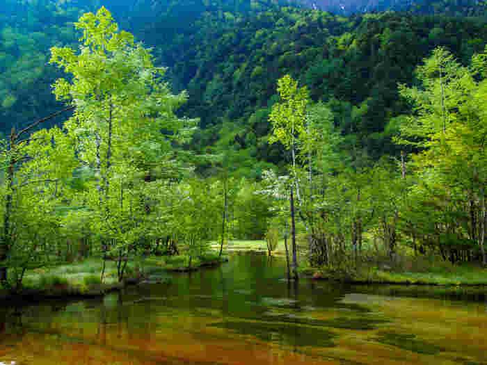 「田代」とは「水田」という意味で、田代池とは「水田の池」という意味を持ちます。