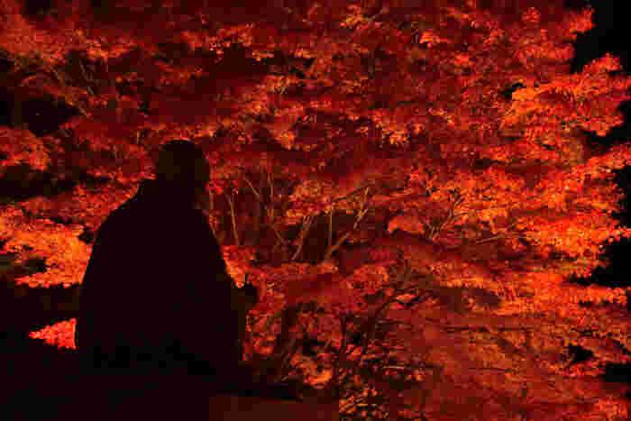 「知恩院」では、毎年紅葉時になるとライトアップされ、夜間拝観出来ます。詳しくは公式HPまで。【11月下旬の「知恩院」】