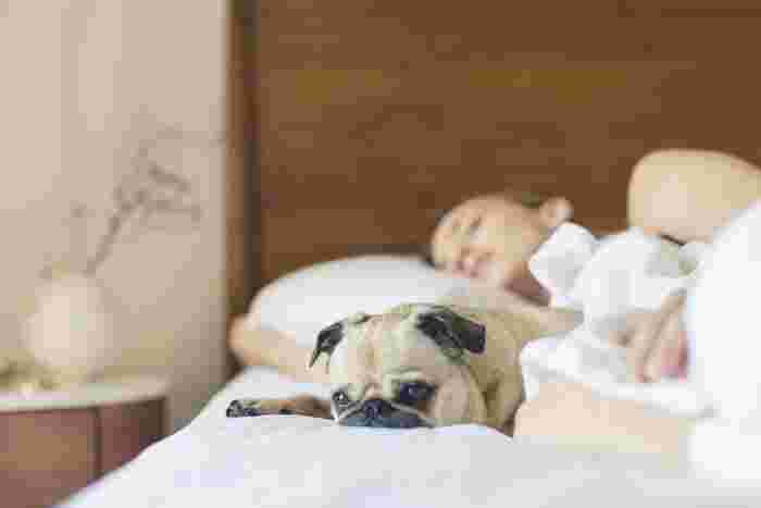 春先の不安定な「眠り」を解消しませんか? 睡眠チェック×心地よく眠るための10のポイント