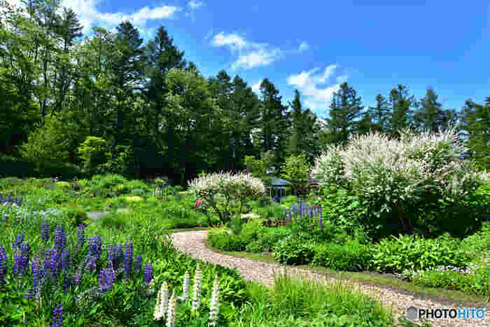 2008年に放送されたテレビドラマ「風のガーデン」の舞台となった場所、風のガーデンは新富良野プリンスホテル敷地内にある洋風庭園です。深い森を連想させる背の高い樹々と、400種類もの花々が見事に開花する風のガーデンではおとぎ話の挿絵のような景色を眺めることができます。