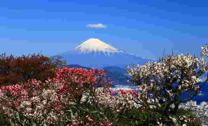 日本の暦には二十四の節気と、七十二もの季節があることをご存じですか?