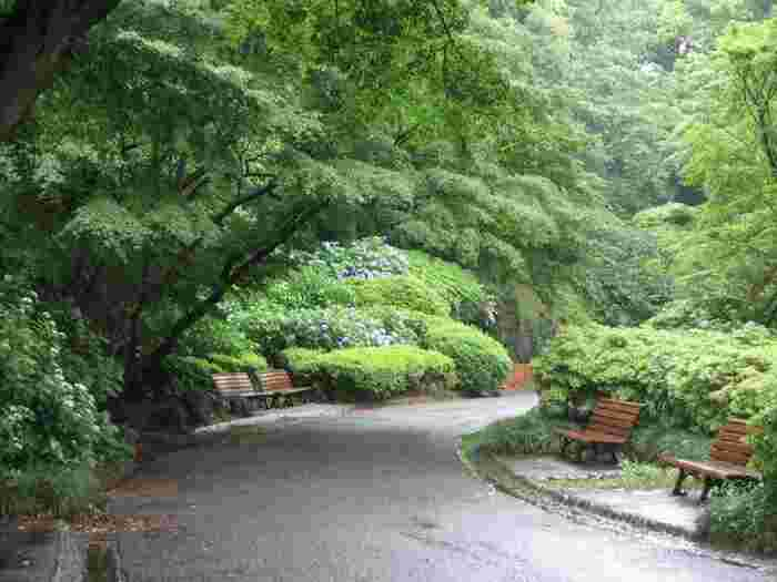 記事を参考に「皇居東御苑」を訪れて、ゆったりとした一時を過ごして下さい。 いつでも「皇居」の豊かな世界が、貴方の心と身体をリセットして、新鮮な活力を与えてくれるはずです。 【5月末頃の苑内、ベンチが設けられた遊歩道。】