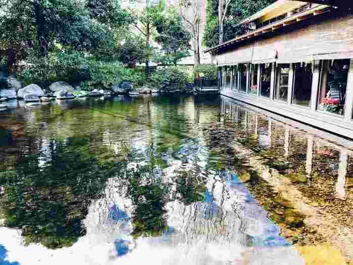 足元には大きな池があり、鯉がゆうゆうと泳いでいます。都会にはない風景を楽しめるのも、旅行の醍醐味ではないでしょうか?