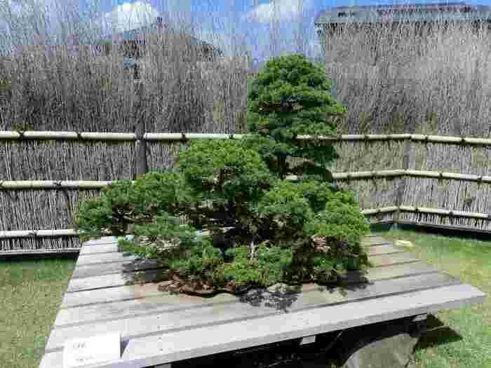 盆栽を眺める一日を過ごしてみてはいかがでしょうか?