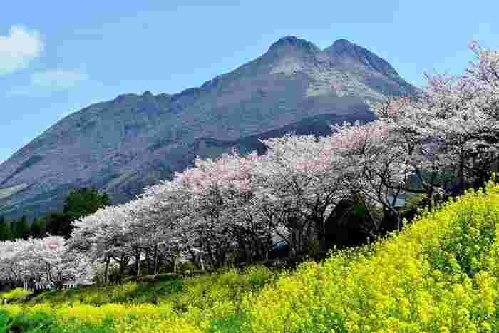 いかがでしたか?今回ご紹介した桜の名所は、3月下旬頃から見頃を迎える所が中心です。4月頃から見頃を迎える山にある一心寺は少し遠いかもしれませんが、一見の価値ありです!桜祭りに出かけてみると、春をより一層楽しめるかもしれませんね。夜桜を楽しめる場所も多いので、日昼とはまた違った桜もぜひ満喫しみてくださいね♪