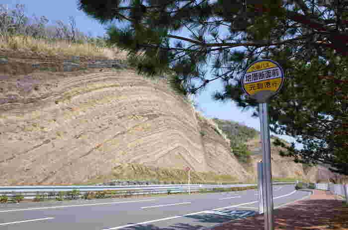 伊豆大島をドライブしていると突然目に飛び込んでくる迫力ある「地層断面」。この地層は、伊豆大島の火山の歴史を物語っているとても大切なもの。150年に1度の大噴火により形成されている地層です。その姿はまるでバームクーヘンのようにも見えます。