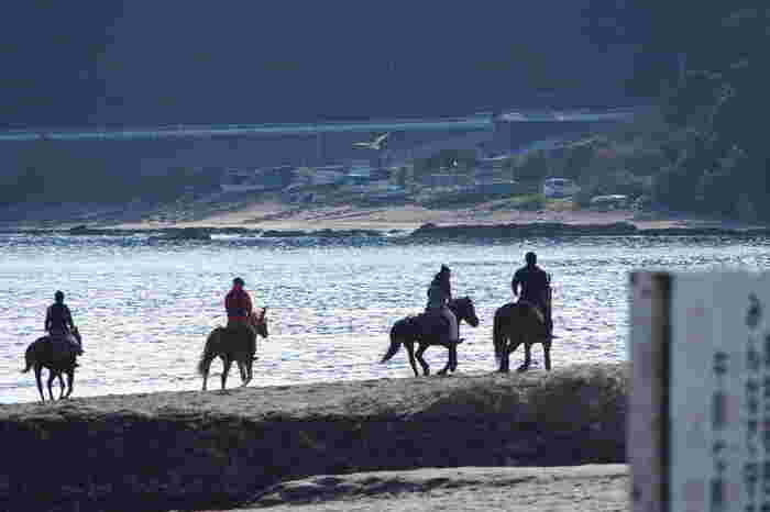 颯爽と馬に乗って走る、乗馬もカッコいいですね。実は乗馬はエクササイズ効果も期待できるのだとか。こちらはホーストレッキングの様子。海辺を走る姿は気持ち良さそうです。