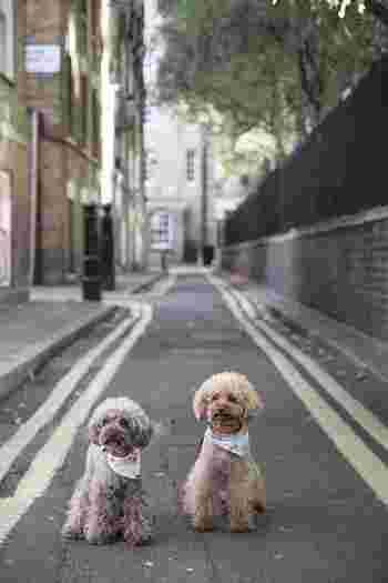 ひとりでは寂しい思いをさせてしまうから、仲間を増やしてあげたほうが良いのでしょうか?群れで暮らしていた犬は、多頭飼いすることで自然とルールを覚えます。しかし、もともと1匹で飼われていた犬は、後から犬を増やしてしまうことで愛情が減りストレスを感じてしまうことも。徐々に様子を見ながら増やしてあげるのが良いようです。