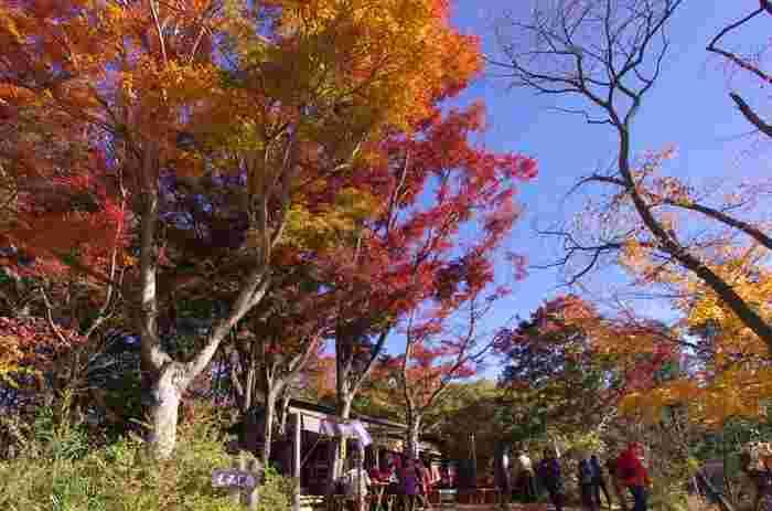 紅葉、桜など、四季折々の風景が楽しめるのも高尾山の魅力です。何度行っても楽しめる、都会から近い森「高尾山」で、リフレッシュはいかがでしょう。