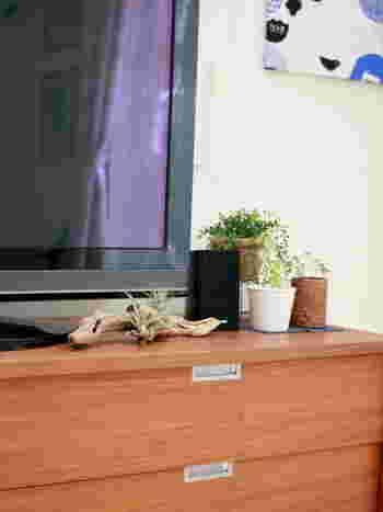 流木とエアプランツの相性は、どちらも自然素材ということもあり抜群です。和のイメージでナチュラル系のお部屋に仕上げたい方には特におすすめの飾り方です。テレビボードや棚の上などにいかがでしょうか?