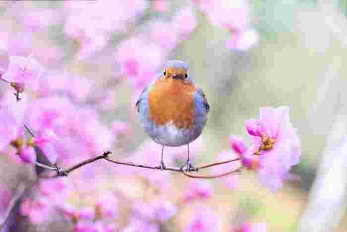 出会いや別れ、新しい旅立ちがある3月は、気候も穏やかになり春の訪れを感じられる健やかな時期でもあります。桜やチューリップなど春の花も咲き始め、なんだかワクワクする季節ですよね。