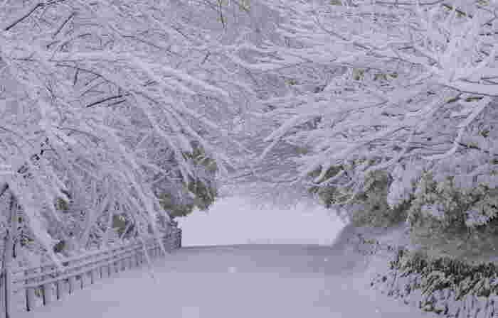 1250年ほど前の万葉時代から人々に愛され続けてきた眉山。雪に覆われた冬の風景もまた、絵に描いたように美しいですね。