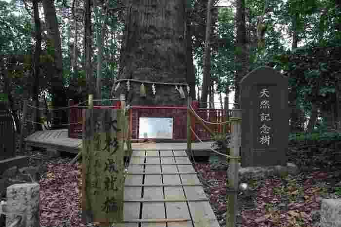 境内のご神木は東日本一の大杉。樹齢は1,300年以上で、千葉県の指定記念樹第1号に指定されています。