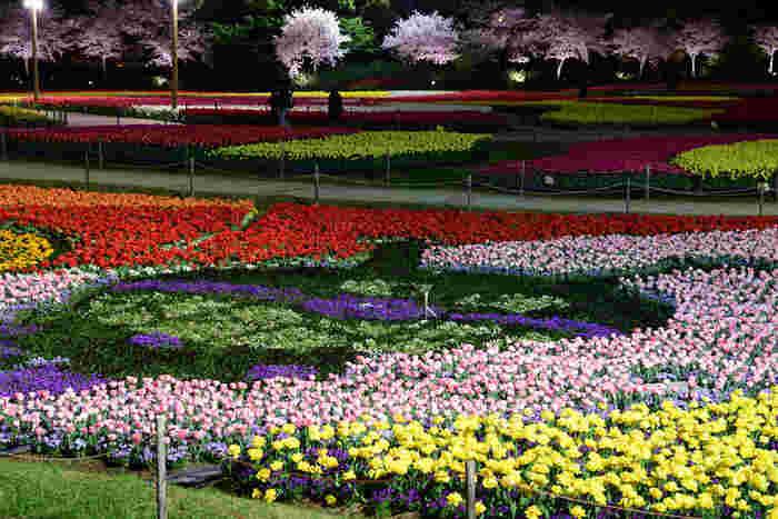花ひろばでは、四季折々で一面に色とりどりの花々が大地を覆い尽くします。初春にはひろば一面にチューリップが咲き、花ひろばは色鮮やかな絨毯のような姿となります。