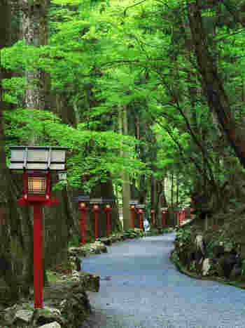 """貴船山を吹き渡る風に揺れる青紅葉の緑には、""""清涼""""という言葉がぴったり。「また、秋の紅葉(こうよう)の時にも来たいなぁ」きっと、そんな風に思いますよ。"""
