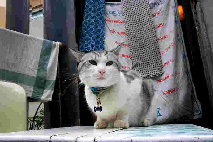 看板猫のトンちゃん♪兄弟のスンちゃんと一緒にお店で暮らしており、気ままに外とお店を出入りしているそうです。美味しいおまんじゅうをいただきながら、猫ちゃんと戯れるゆる~い空気がニャンとも素敵。
