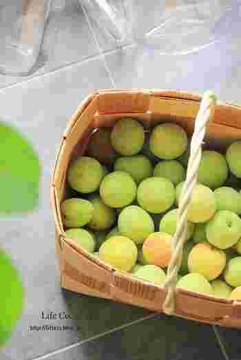 梅干し、お酒、シロップまで…今年はじめる方に贈る『梅仕事』の基本のキ