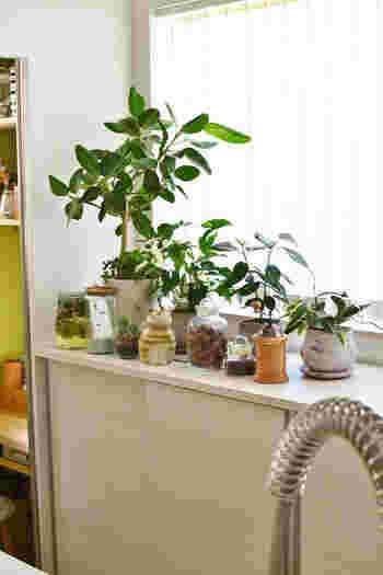 キッチンキャビネットの上にさまざまなインテリアグリーンを集めて飾っています。カーテン越しに注ぐ柔らかな光が、グリーンをよりみずみずしく素敵に見せていますね。オブジェやキッチン雑貨と一緒に飾れば、ナチュラルな世界観をよりふくらませてくれます。