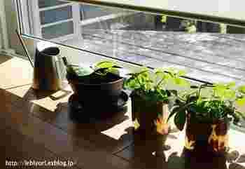 植物の水やりは太陽が出ている時間帯が適しているので、朝にしておきたいものです。朝たっぷりと水をあげて、枯れた葉を取り除いて綺麗にしてあげると、植物もいきいきとしてくるはずです。