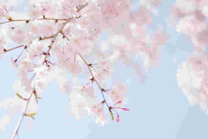 季節を感じながら暮らすって素敵♪日常のなかで「春」を楽しむ6つのこと