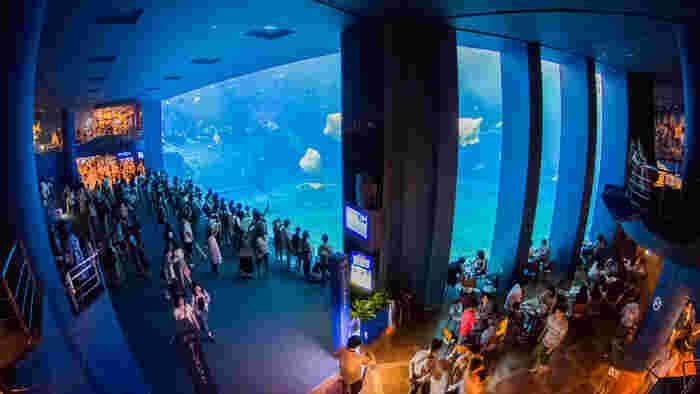 沖縄美ら海水族館カフェ(沖縄・美ら海水族館内)・・・沖縄の神秘の海をそのまま楽しめてしまうダイナミックなカフェといえばここ、カフェオーシャンブルーです。ジンベイザメが悠々と泳ぐ姿を眺めながら、この海の中の特別指定席に是非座ってみたいですね!