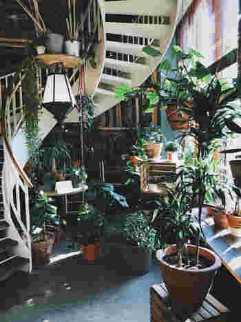 グリーンに囲まれた階段まわり。窓から差し込む太陽に、植物も気持ち良さそうです。