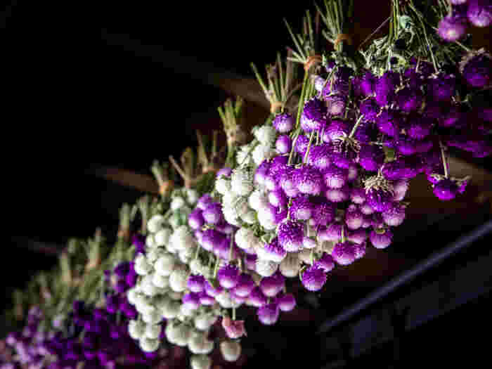 千日紅やスターチスの様に、生花の時から少しカサカサした質感のお花もドライフラワーに適しています。黄色がきれいなミモザ、赤がきれいなケイトウなどは、クリスマスシーズンにも活躍してくれそうですね。