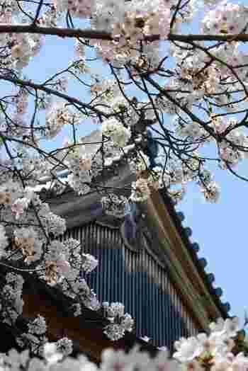 華道祭の頃は、桜の美しい季節。春の季節に訪れるのなら、いけばなの世界にも触れましょう。詳細は公式サイトで確認しましょう。
