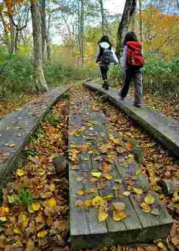 登山道の中には狭い場所も。山道で人とすれ違うときは、一般的には登りが優先。誤ってぶつかって、転落することなどを防ぐために、下っている側が山側によけて待ちます。 ただし、すれ違う場所や状況次第では、登りの人がよけた方が安全なケースも。状況に応じて臨機応変に対応するようにしましょう。