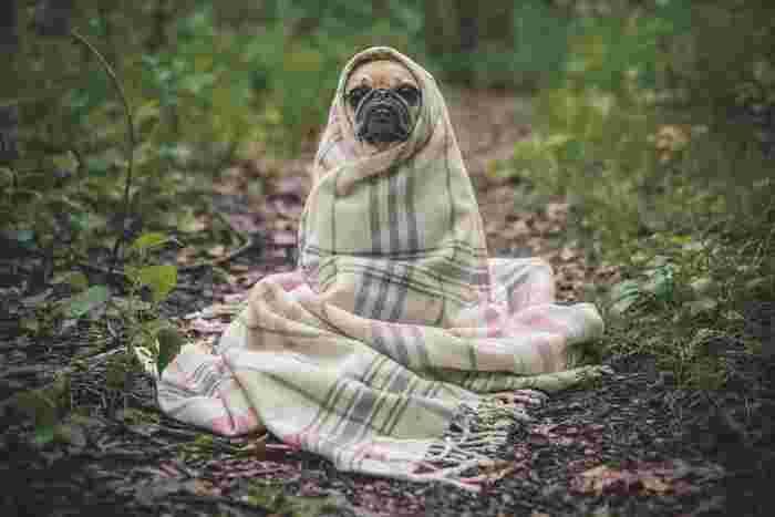 外の暑さと中の寒さの調節がうまくできないと、体もまいってしまいます。夏バテの一因となることだってあります。