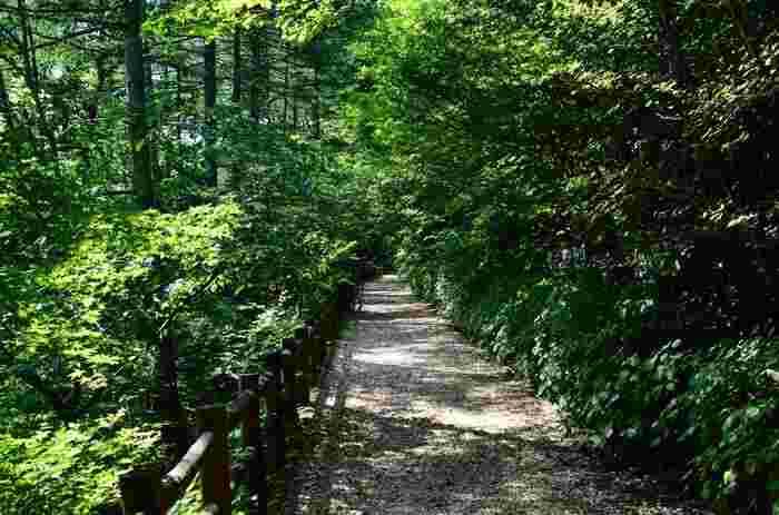 三頭山の山頂へは、東京都檜原都民の森からのアクセスが便利です。豊かに生い茂るブナの原生林で森林浴を楽しみながら歩く心地よさは格別です。
