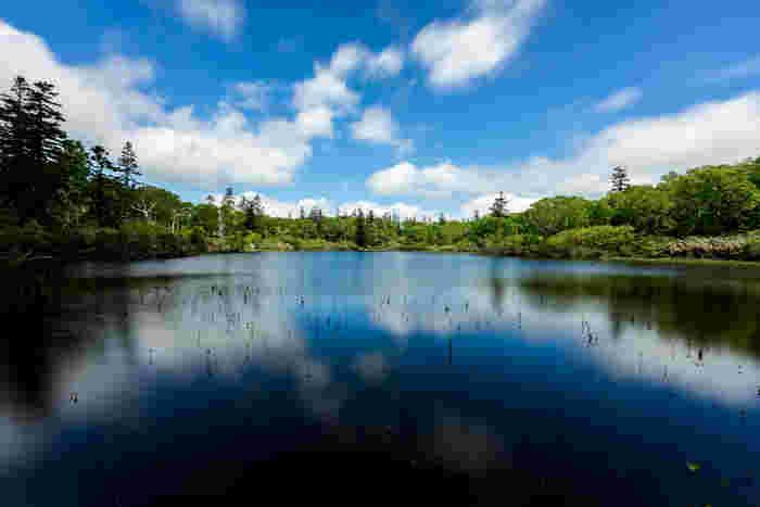 神仙沼は、ニセコ山系の高層湿原にある約1.5ヘクタールほどの沼です。ボーイスカウトの創始者である下田豊松氏が、この地を訪れたときに、その美しさに感銘を受け「皆が神、仙人の住みたまう所」と感激したことから神仙沼という名前が付けられたと由来されています。