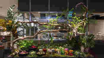 お料理からワインまで、全てのメニューでとことんオーガニックにこだわり抜いた本格派のお店。東京 恵比寿、大阪 梅田にも店舗があります。 マクロビ・ヴィーガン・グルテンフリー・ローフードなど多彩な料理法のオリジナルレシピが盛りだくさん!
