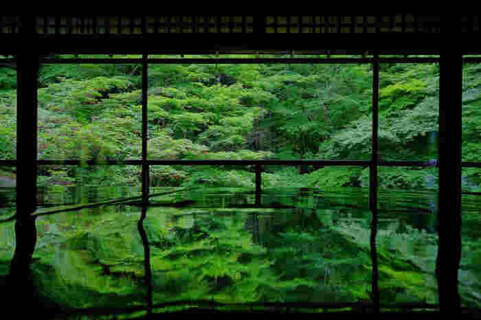 新緑の春と、紅葉の秋のみ、特別拝観というかたちで公開される、瑠璃光院。春の特別拝観は2018年4月15日(日)~6月15日(金)、時間は10時〜17時となっています。 書院の外に広がるのは「瑠璃の庭」。磨き抜かれた机や床に深い色合いの緑が写り込む様は、現実を忘れそうなほど幻想的です。