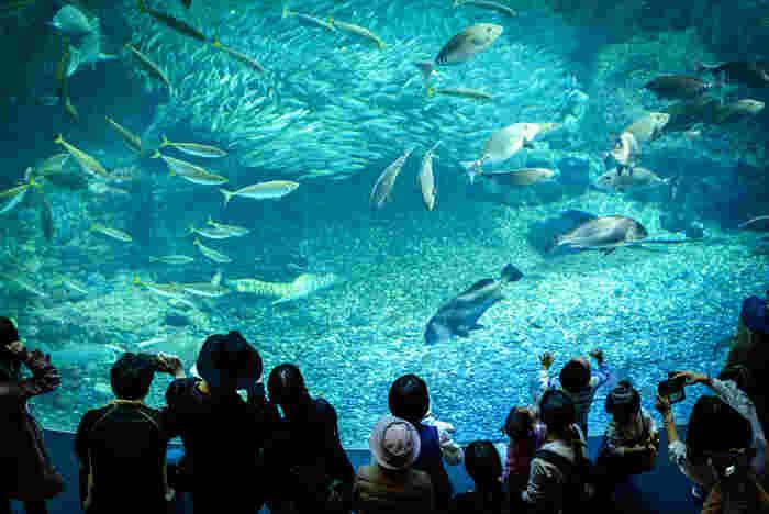 江ノ島駅には、あの有名な「新江ノ島水族館」があります。臨場感のある水槽やイルカショーが人気で、平日でも賑わいをみせています。そんな【江ノ島駅周辺】のカフェはこちら。