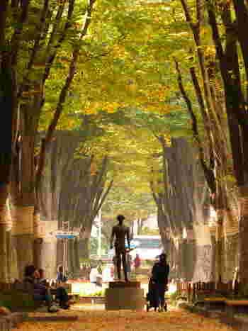 仙台・定禅寺通のケヤキ並木。例年10月下旬頃から11月にかけて、美しい紅葉が見られます。