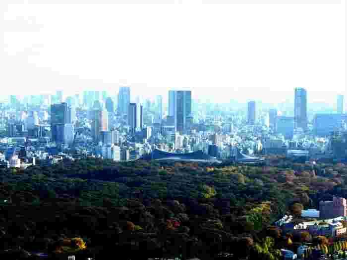 都会の一等地に、こんな森が守られているなんてとても贅沢です。