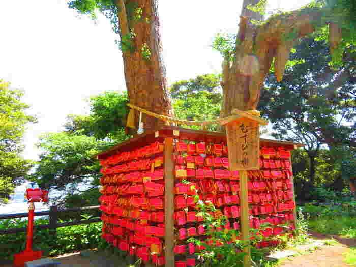 江島神社の辺津宮(へつみや)のご神木は「むすびの樹」と呼ばれ、銀杏の木の幹が二つ、根が一つになっていることから、縁結びのご利益があるとされています。周囲には、ピンクのハートが描かれた良縁成就の「むすび絵馬」がたくさん掛けられています。