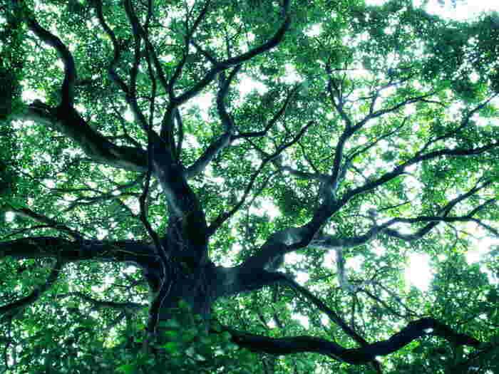 木のざわめきや香りに包まれて、いつもとは違う視点から世界を眺めてみませんか?