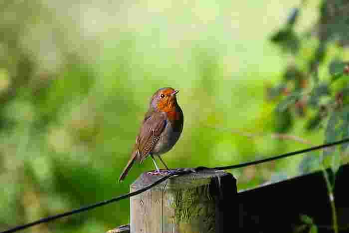 日本人は小鳥のさえずりを言語脳とよばれる左脳で感じるといわれています。自然の音を言葉のように特別な感情として聞くことができるなんて、すごいことですよね!たまには小鳥のさえずりに耳を傾けてみませんか?