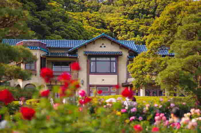 「バラ園」でよく知られる「鎌倉文学館」。春と秋に色とりどりのバラが園内を彩ります。例年5月中旬から6月初旬にかけては「バラまつり」が開催されます。【画像は5月中旬頃撮影】