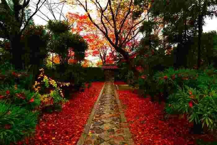 鮮やかな赤の絨毯に圧倒されますね。