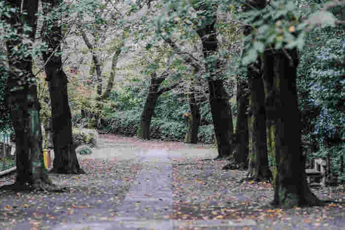 大きな木に囲まれた園内は、いつ訪れても四季の移ろいを感じることができます。夏はセミの声、秋は紅葉を楽しみながらの散策もステキですよ。
