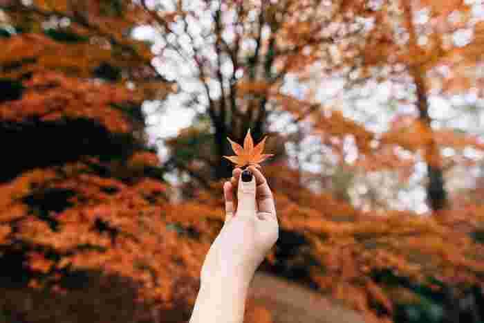 秋の行楽の定番といえば紅葉狩り。「狩り」とは本来、森の中に入り獣を捕らえることですが、狩りをしない貴族が、狩りのためではなく自然を楽しむために森に入って紅葉を愛でたのが「紅葉狩り」の由来といわれています。押し花のように保存してコレクションするのもいいですね♪