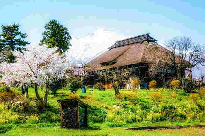 いかがでしたか? 美しい自然の風景だけでなく、食べ物やお酒、お祭りなど、世界に誇れるものがたくさんある青森県。 夏でもムシムシせず過ごしやすいので、ぜひ今年の春夏は、青森を訪れてみてはいかがですか?