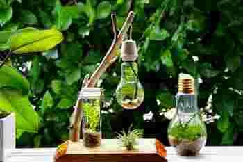 涼し気なボトルアクアリウムは、涼やかで、夏の暑さをやわらげてくれますね。光が当たるキラキラととってもきれい。