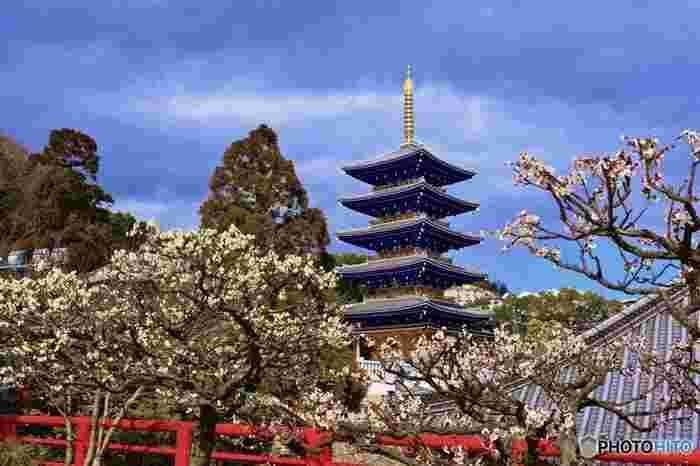 聖徳太子によって創建された中山寺は、安産祈願、お宮参りなど年間を通して様々な参拝者で賑わう古寺です。